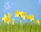 Hay Fever Hits Hardest at the Start of Spring