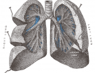 Powerful Powder Improves Cystic Fibrosis