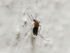 Dengue Spotted in South Texas