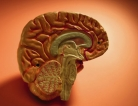 Why do Brains Shrink From Depression?