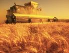 Pesticides Increase Risk for Parkinson's Disease