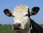 Raw Milk Means Real Risks