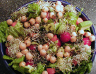 Raw Sprouts: Are They Safe to Eat?
