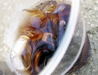 Sugary Drinks Linked to Higher Blood Pressure