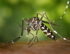 Mosquito-Borne Virus Spikes in Western Hemisphere