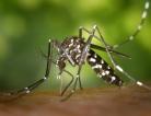 Chikungunya Outbreak Still Spreading