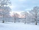 Nix Winter Melancholy