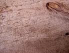 Clarification on Using Wood Shelving in Artisanal Cheesemaking